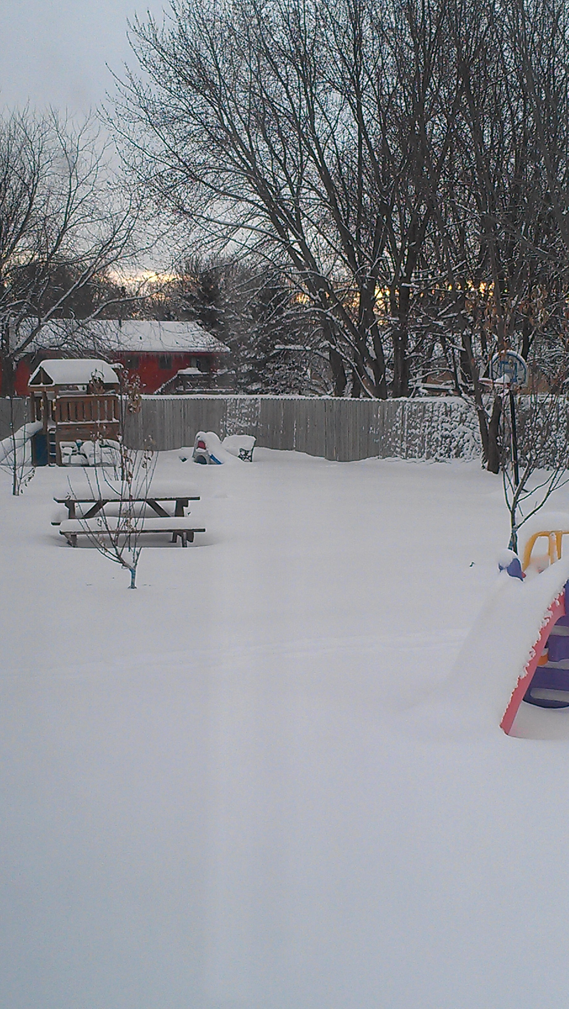 A peek into our back yard, looking towards our neighbors', this morning.