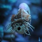 Field Trip Friday: Aquarium Edition!