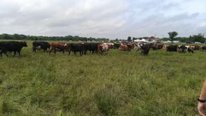 Visiting the Farm - Milkapalooza