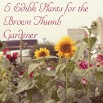5 Edible Plants for the Brown Thumb Gardener