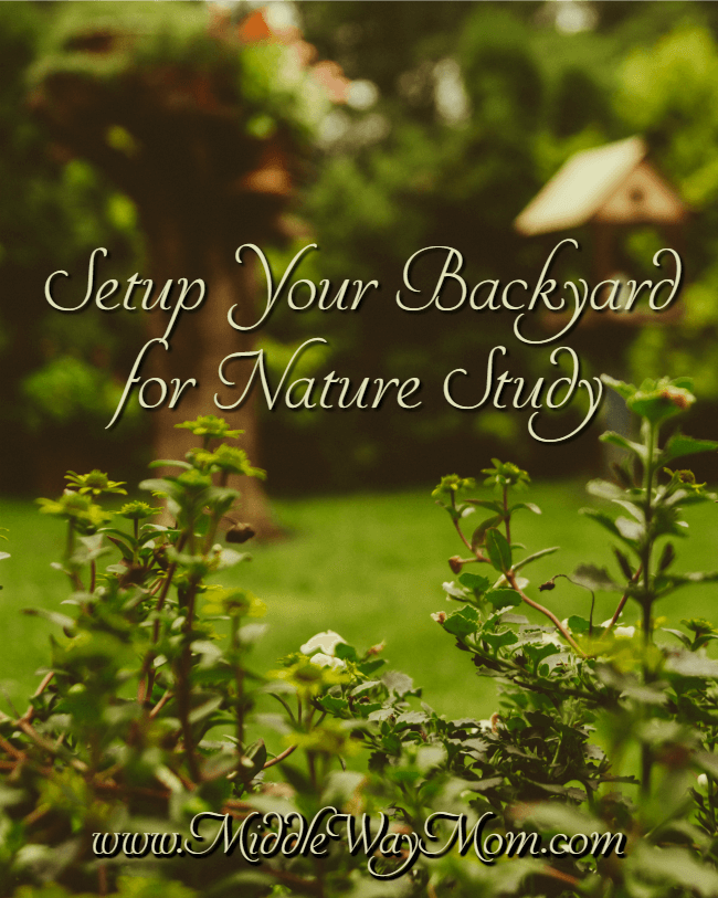 Set up nature study opportunities in your backyard, because we can't all get out to parks and reserves as often as we'd like.