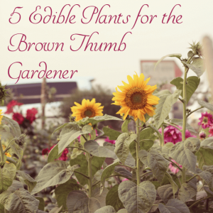 5 Edible Plants for the Brown Thumb Gardener - Are you a beginner gardener, or just not that skilled at gardening? If I can keep these plants alive, so can you!